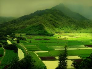 Green crop fields