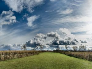 Wide stretch of grass