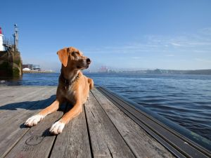 A dog rests in the pier