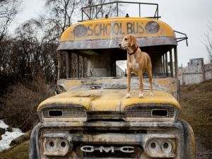A dog over an old school bus