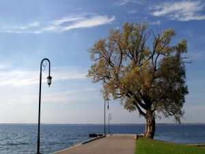 Tree in pier