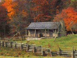 Wood cabin between trees