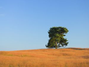 Green tree and the orange grass