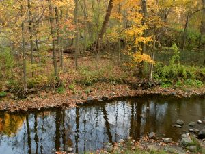 A small river between autumnal trees