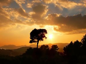 Golden sun at sunset