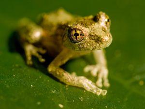 Frog over a leaf