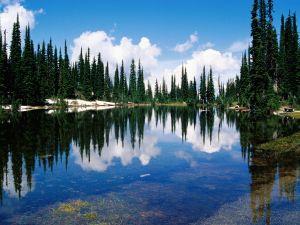 The lake bottom