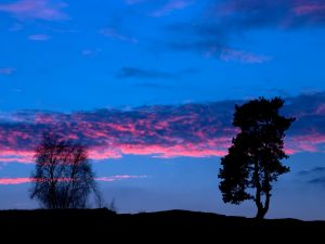 Nice sky and trees in the dark