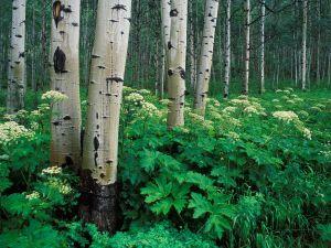 Great green plants between trees