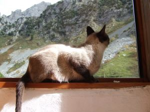 Cat looking at the mountains