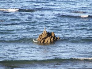 Seagull on a rock of sea