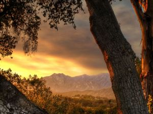 Watching the sunrise next at tree