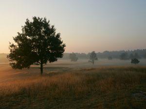Something fog between trees