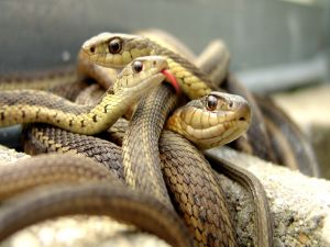 Snakepit