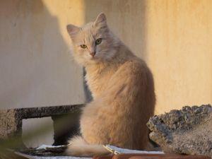 A beautiful stray cat
