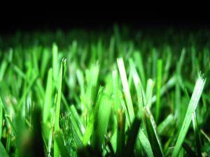Bright lawn