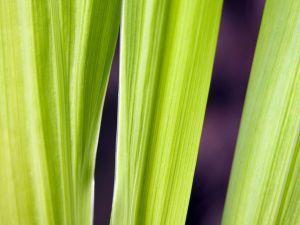 Green leaves elongate