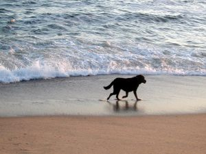 Dog on the seashore
