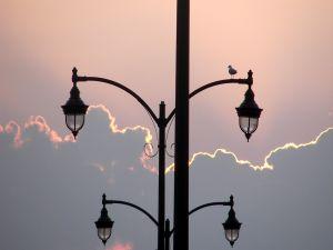 Bird over the streetlight