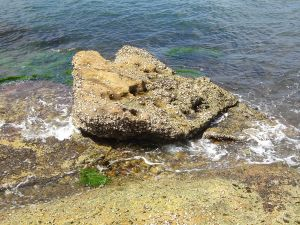 Rock on the shore