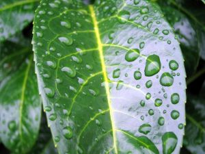 Bright leaf with raindrops