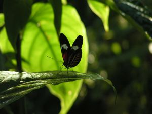 Butterfly in the shade