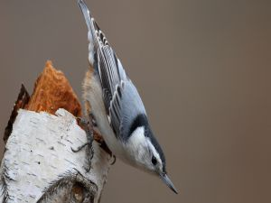 Bird over a tree trunk
