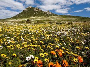 Field of little flowers near the mountain