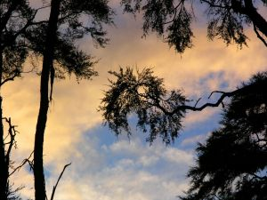 The sky and trees
