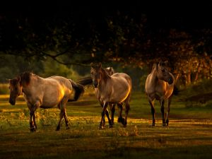 Horses walking under the trees