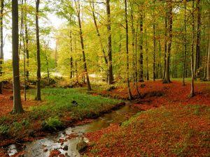 Little stream running between trees
