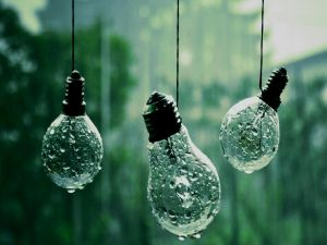 Bulbs in the rain