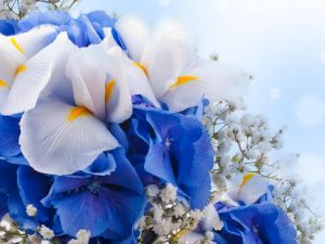 Elegant bouquet with white and blue petals