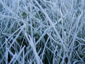 Frozen grass on a winter day