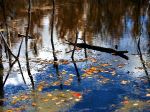 Sticks and leaves on the water surface