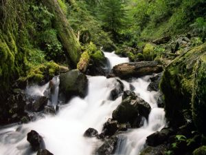 The force of the river in the forest