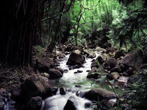 Hidden river between vegetation