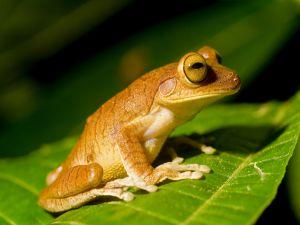 A very still frog