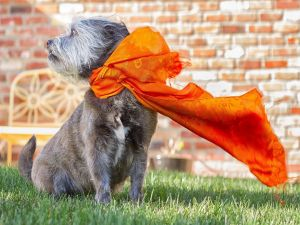 A puppy with a orange scarf
