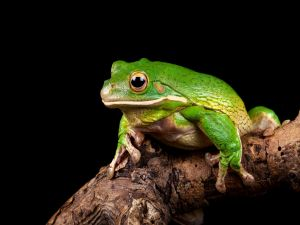 Frog over a trunk