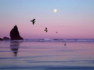 The moon and seagulls in the sky at nightfall