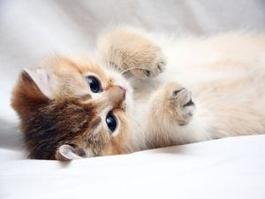 A cuddly kitten