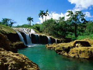 Waterfall, trees and palms