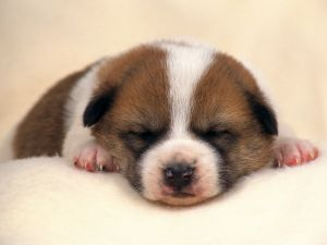 Puppy asleep