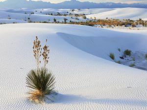 Desert of white sands
