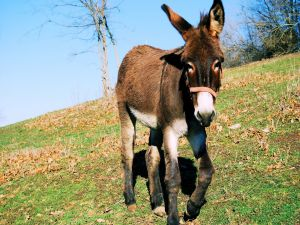 Sympathetic donkey