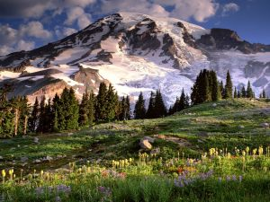 Flowers on the mountain