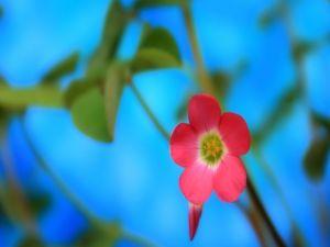 Pink floweret