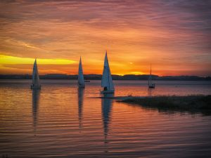 Sailboats in the sea at sunset