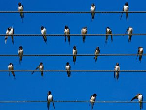 Birds over the cables